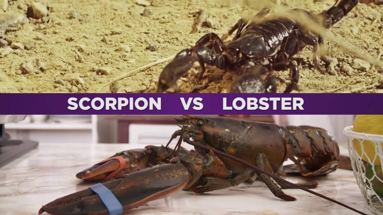 Shark Lobster vs Scorpion - YouTube