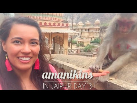 Amanikins in Jaipur, India! Vlog 3/3