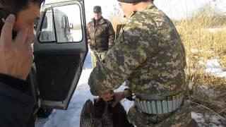 видео: А нам все дозволено егеря Кордайского района