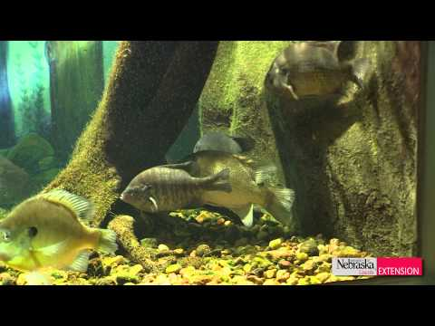 Native Nebraska Fish