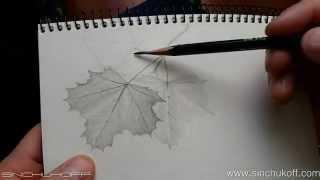 Рисуем Листья клена