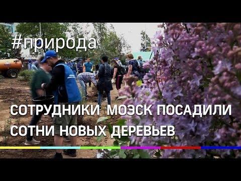 Сотрудники компании МОЭСК посадили сотни новых деревьев в Жуковском