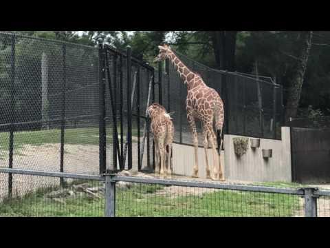 Maryland Zoo Baltimore