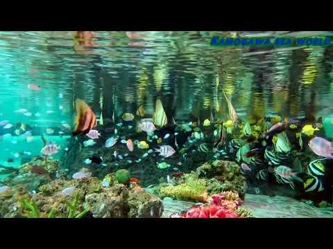 Mister aquarium 2