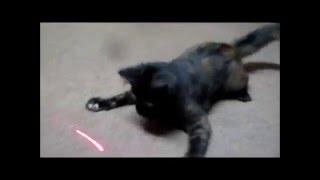 Love Laser Kitten
