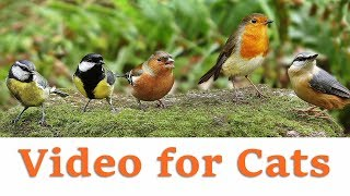 Videos for Cats to Watch  November Birds Extravaganza