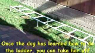 Dog Agility Training 'Tips' - Agility Ladder