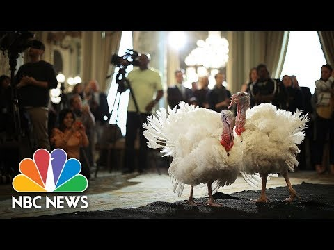 Watch Live: President Trump leads turkey pardoning at White House