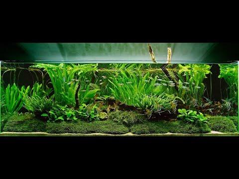Aqua Studio | Live plant Aquarium