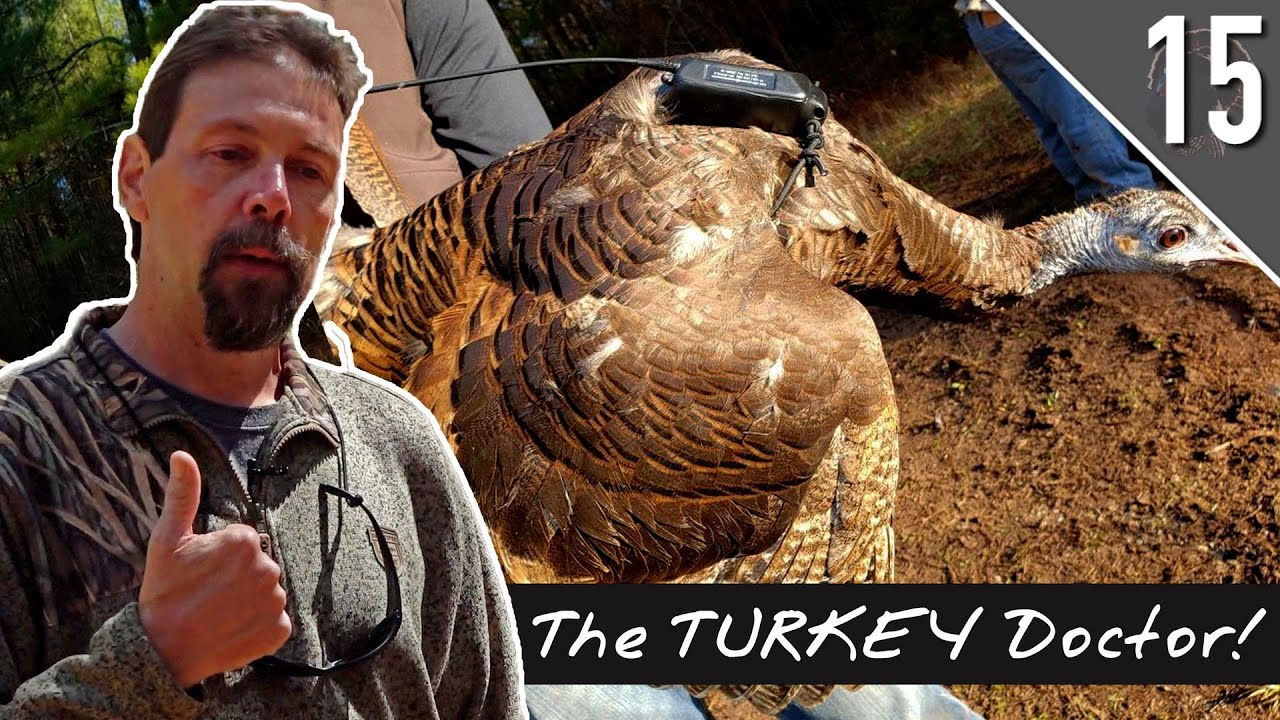 THE DECLINE of WILD TURKEYS!!! Why Research Matters with Dr. Mike Chamberlin