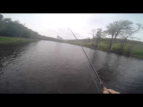 A Monster Brownie On The River Tweed