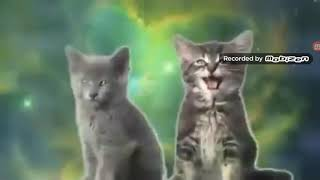 Коты поют смотреть всем