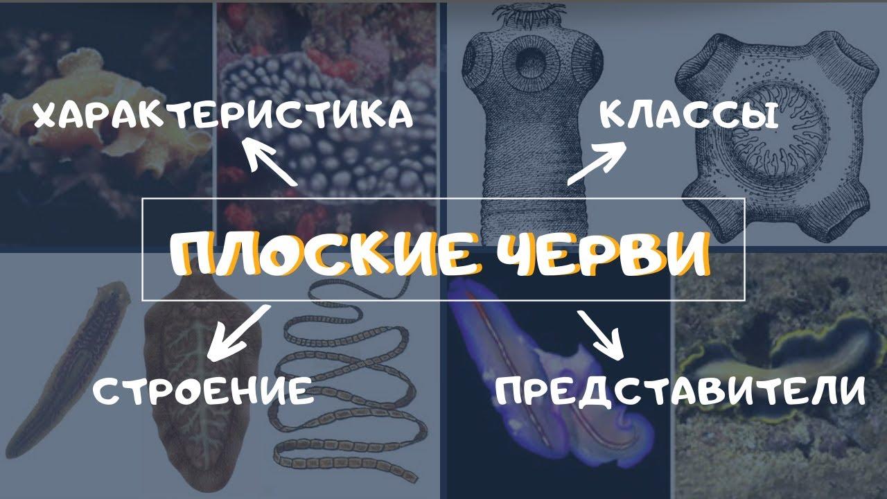 Тип Плоские черви. Классы, строение плоских червей. Ленточные черви Паразиты Биология 7 класс. ЕГЭ