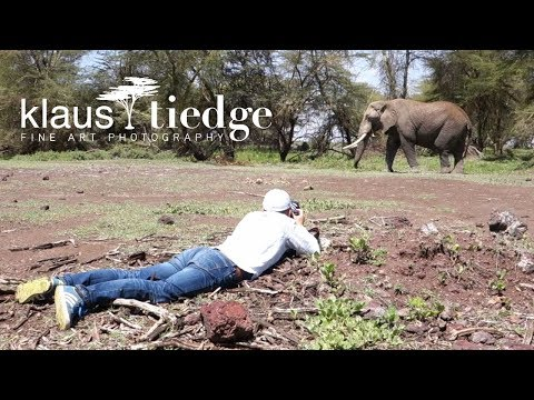 Safari in Kenya with wildlife photographer Klaus Tiedge - Amboseli highlights