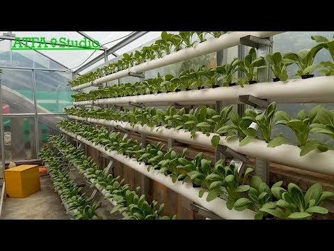 Proses Pembuatan Instalasi Hidroponik Sistem DFT Skala Industri With Maliawan Farm