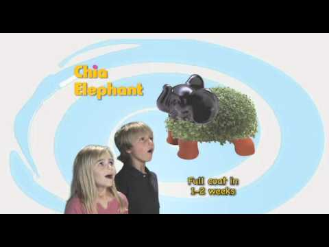 Ch Ch Ch Chia Chia Pet The Gift That Grows Youtube
