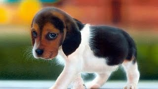 Top 10 most friendly pets in the world