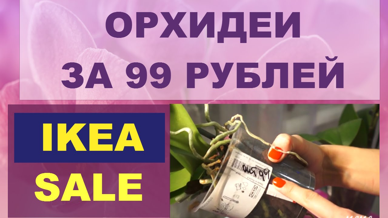 5 мар 2018. Украинская ikea: что предлагает новый эпицентр к в киеве. Где можно купить практически все, за исключением, разве что, продуктов.