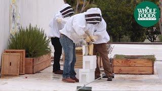 Santa Barbara Backyard Beekeepers  l  Love Local - Share The Buzz  l  Whole Foods Market