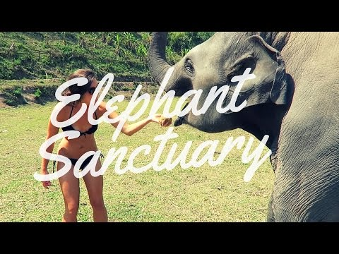 INCREDIBLE Elephant Sanctuary Experience - Chiang Mai, Thailand 2016