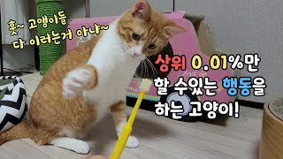 상위 0.01% 만 할 수 있는  행동입니다^^특이한 고양이 대박^^