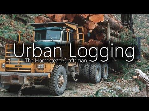 Urban Logging - Finding Free logs for Lumber