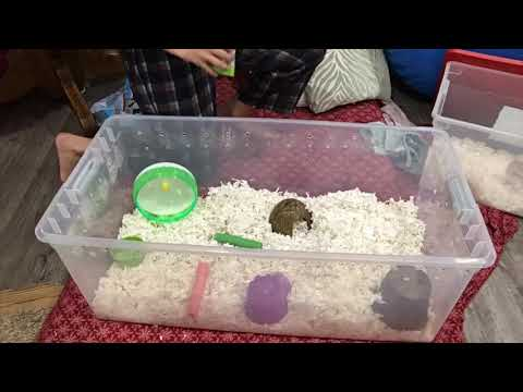 Hamster Cage Cleaning Timelapse Bin Cage