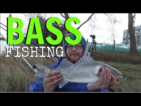 Bass Fishing From Fareham Creek -  Sea Fishing From Portsmouth Harbour - Bass