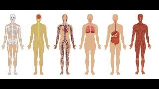 هل تعلم أن 57% من جسم الإنسان ليس بشريًا؟