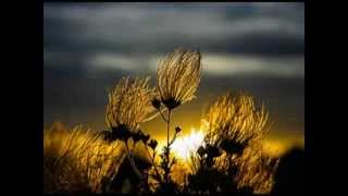 Lounge Music [Giovanni Perini - Lake Of Flowers] - ♫ RE ♫