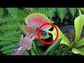 Las 10 Plantas Carnívoras Más Aterradoras Del Mundo