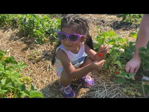 We Went Strawberry Picking 🍓🍓🍓🍓
