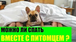 Можно ли спать вместе с питомцем?