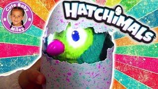 HATCHIMALS INTERAKTIVES KÜKEN - Magisches Haustier schlüpft aus dem Ei ! - CuteBabyMiley