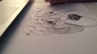 Time Lapse Drawing - Shar Pei
