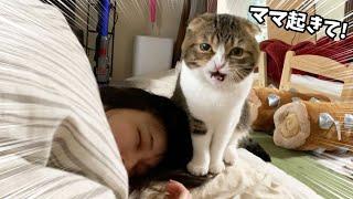 パパ猫激怒!?ママの二度寝を阻止せよ!
