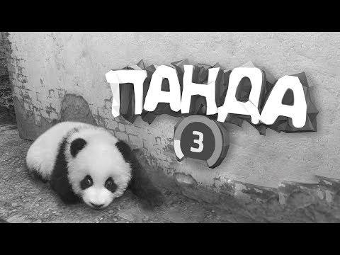 #2 CS:GO - Панда