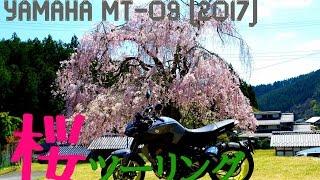 【なにわMotovlog】さくらツーリング@常照皇寺/YAMAHA MT-09