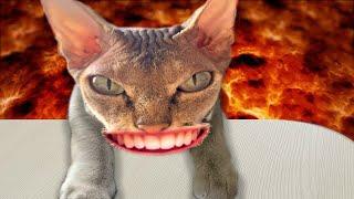 THE FLOOR IS LAVA Escape to lava Eva story Пол это лава   История про спасение котенка #2