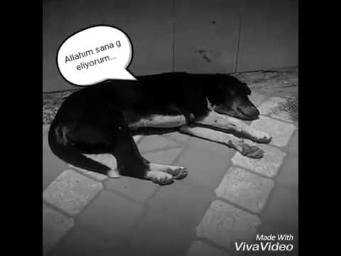 Ezanı bekleyen halsiz kalmış köpekler