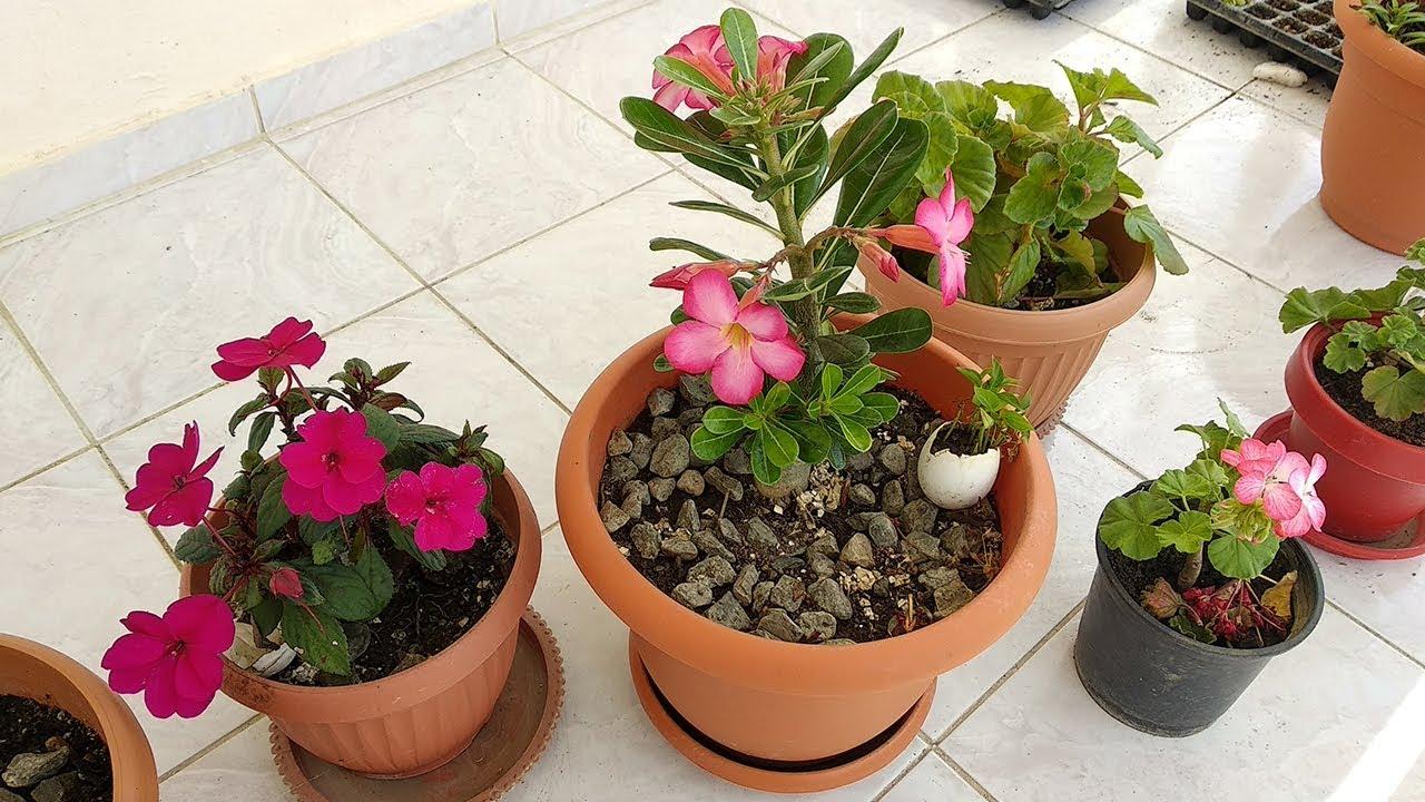 Selecci n de consejos para cuidar plantas de interior en for Plantas ornamentales para interiores