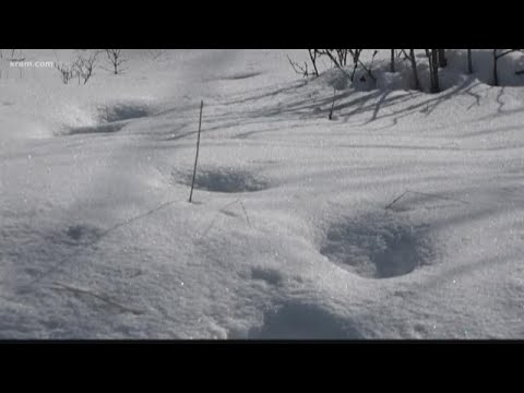 Some believe mysterious tracks in Medical Lake belong to Bigfoot?