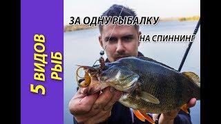 5 видов рыб на спиннинг за одну рыбалку! Съемки для ТВ