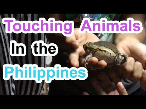 Touching Animals in the Philippines Travel the Philippines VLOG 24 🙊