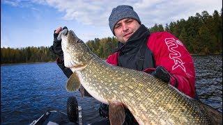 Ловля Щуки осенью на озере. Поймал Щуку крупнее, чем весной. Рыбалка в Эстонии. Озеро Консу.