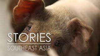 Pig Pen  |  Huế, Vietnam