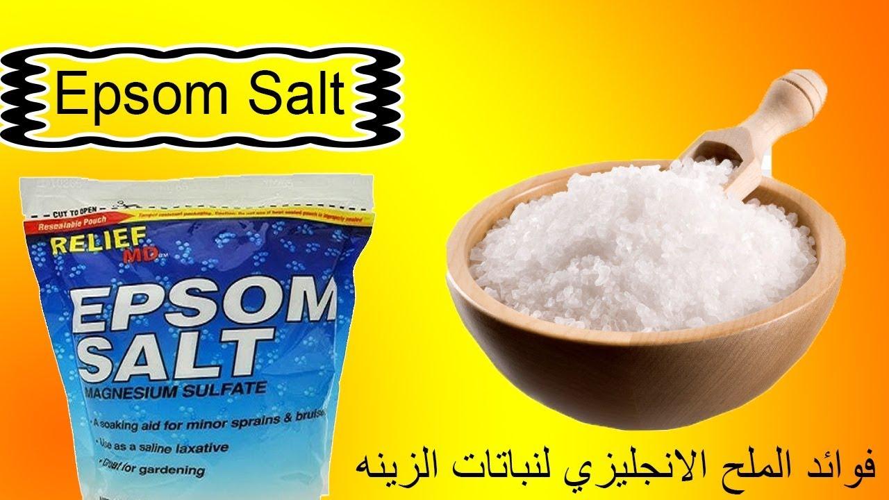 بجنيه و نصف اقوى سماد لنباتات الزينة الملح الانجليزى Epsom Salt Youtube