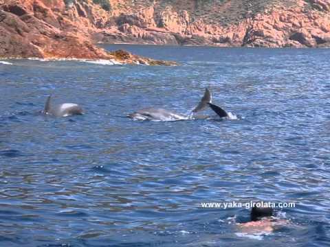 Rencontre avec les dauphins espagne