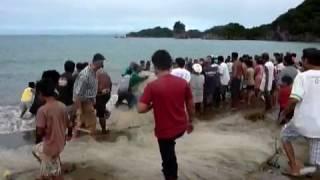 A record fish haul in Paniman, Caramoan peninsula, Philippi