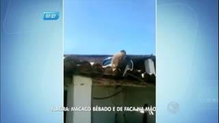 Flagra: macaco bêbado e armado com faca ameaça pessoas na Paraíba